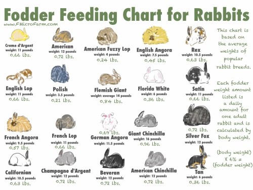 Fodder chart for rabbits