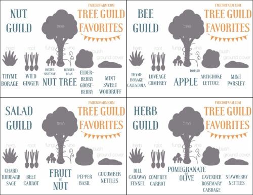 Tree guildpg2